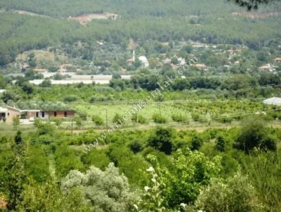 Bauernhof Zum Verkauf In Dalaman Im Dorf Karginkuru . Farm Land Zum Verkauf Muğla Dalaman Karginkuru