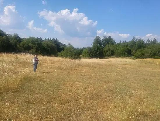 Farm For Sale In The Village Of Dalaman. 32600 M2 Of Detached Land.
