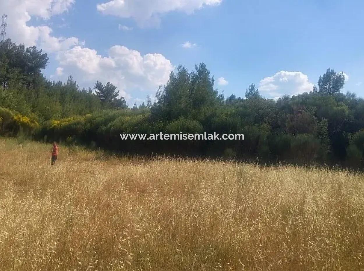 Dalaman Gürleyik Köyünde Satılık Tarla. 32600 M2 Müstakil Tapu.