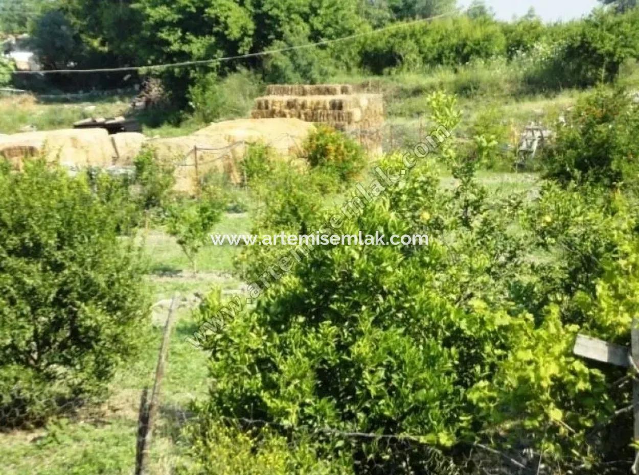 Dalaman Da Şerefler Köyünde Satılık Çok Ucuz Arsa . 700 M2 . Muğla Dalaman Şerefler Arsa Satılık Arsa 280.000 Tl