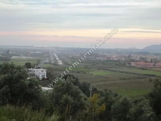 Dalaman Şerefler Köyünde Satılık Denin Manzaralı Zeytinlik.