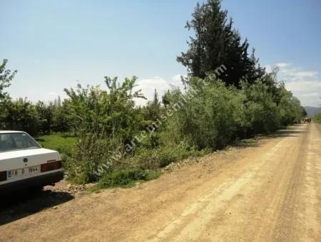 Ortaca Tepearasın Da Satılık Müstakil Tapulu Arazi .25000M2.