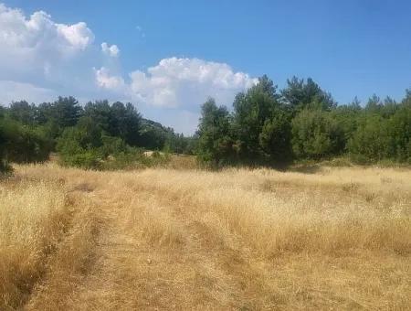 Dalaman Gürleyik Köyünde Satılık Tarla. 31000 M2 Müstakil Tapu.