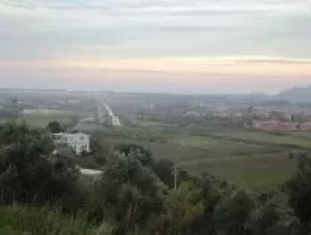 Dalaman Şerefler Köyünde Satılık Zeytinlik. 2450 M2 Müstakil Tapulu.