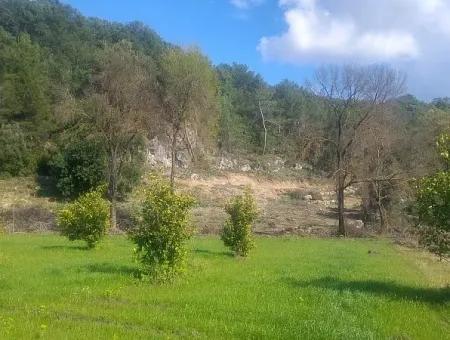 Muğla Dalaman Kapıkargın Da Satılık Müstakil Bahçe.