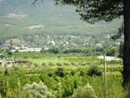 Dalaman Da Kargınkürü Köyünde Satılık Tarla . Muğla Dalaman Kargınkürü Arsa Satılık Tarla.3500 M2 .Tek Tapu.
